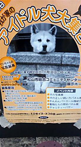 Idol_dog